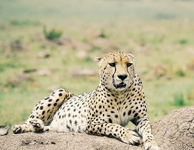 Discover classic Africa Kenya - - Napanda Safaris