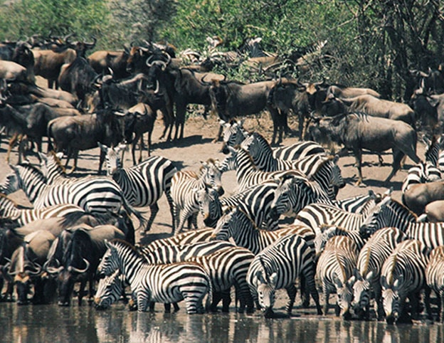 Be in awe of the Great Migration - Kenya Tours
