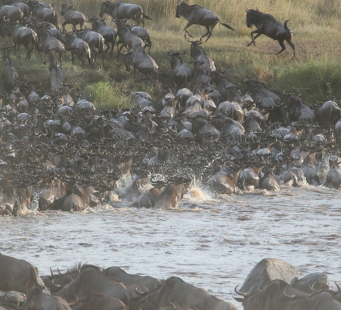12 Days The Great Migration Safaris Package