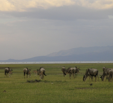 Witness the spectacular African wildlife in an an African family safari.