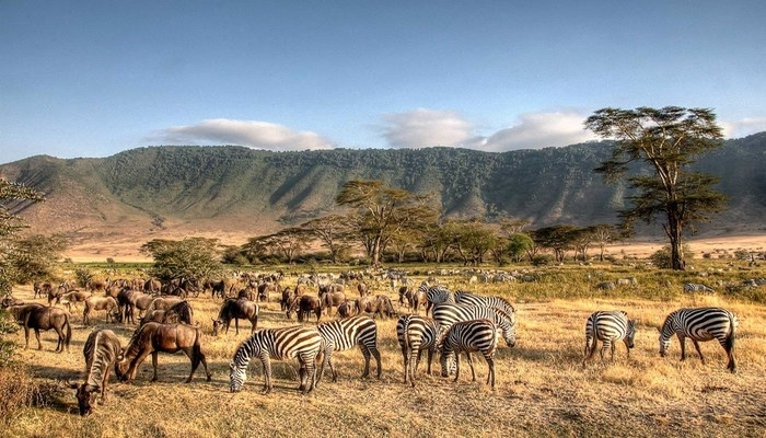If You Can Only Do One Safari, It Should Be Tanzania