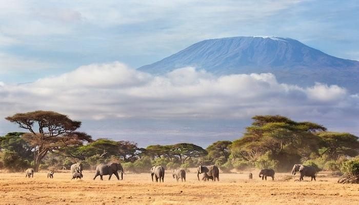 Know how to get to Mount Kilimanjaro in Tanzania through our Tanzania safari guide.