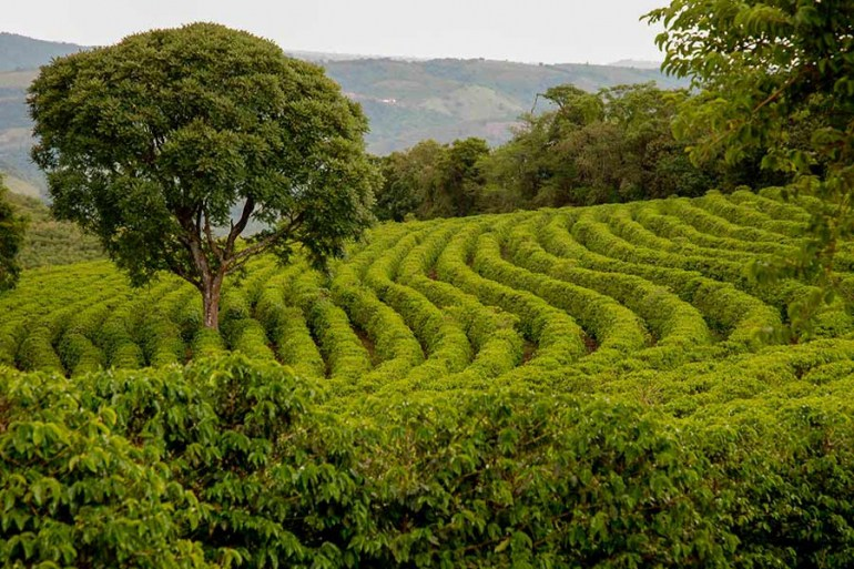 The coffee farm in the foothills of Mount Kilimanjaro is one of the beautiful sights to behold on your Mount Kilimanjaro trek.