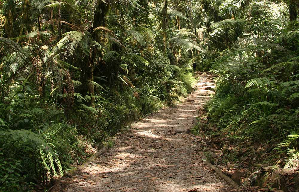 A trail along Montane forest in a Mount Kilimanjaro trek.