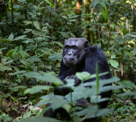 queen elizabeth national park safari: gorilla trekking Uganda