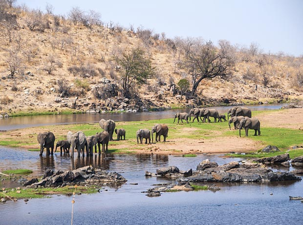 Discover the Unspoilt Wildlife Parks in Tanzania