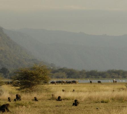 luxury safari Tanzania