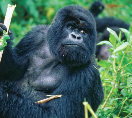 queen elizabeth national park safari - gorilla trekking
