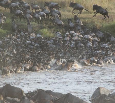 Serengeti migration safari tour