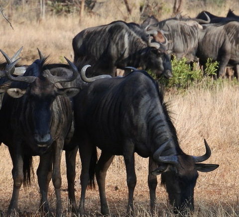 5 Days Phenomenal Migration Safari