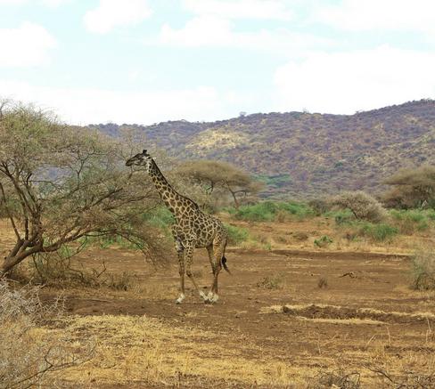serengeti and ngorongoro safari holiday