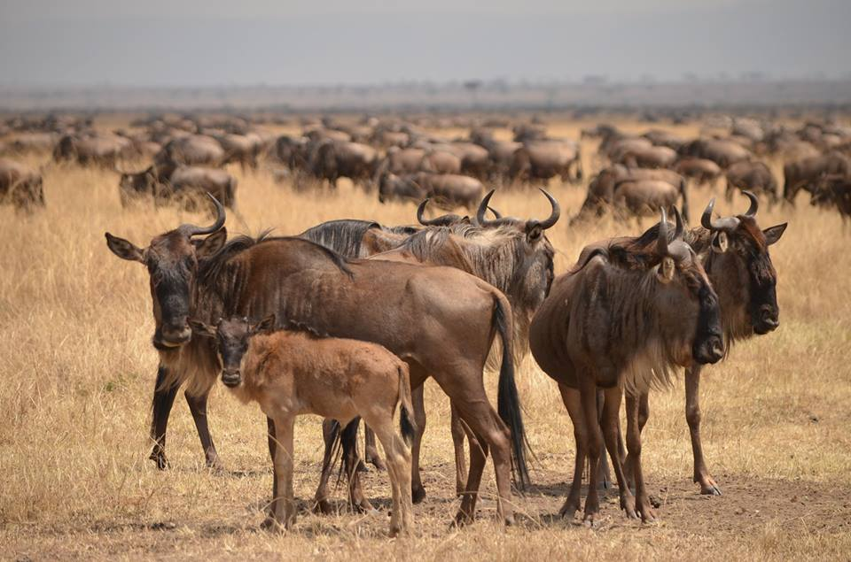 A Guide to East Africa's Great Migration