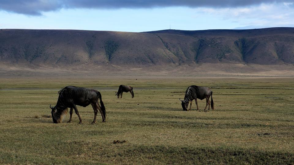 UNESCO Heritage Sites - Ngorongoro Conservation Area