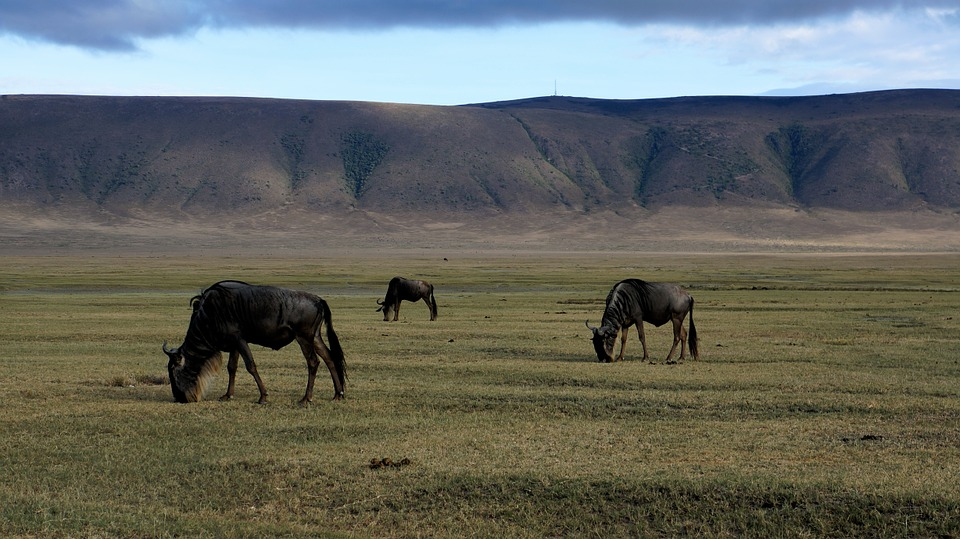 Top 8 Surreal Facts about Ngorongoro Conservation Area