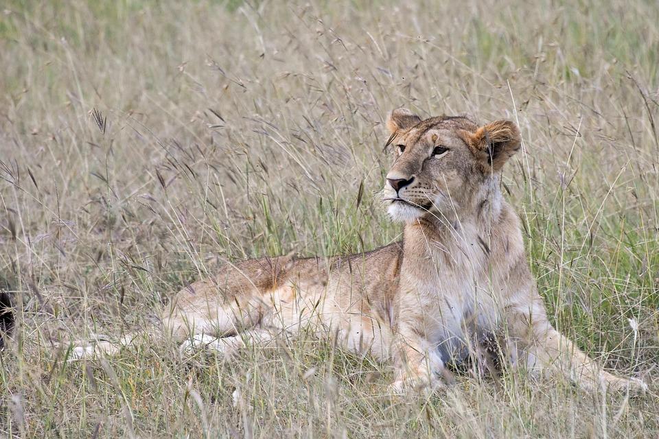 honeymoon in Zanzibar - safari parks