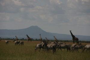 Selous Game Reserve Information - wildlife animals