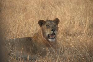 Selous Game Reserve - Largest Wildlife Parks